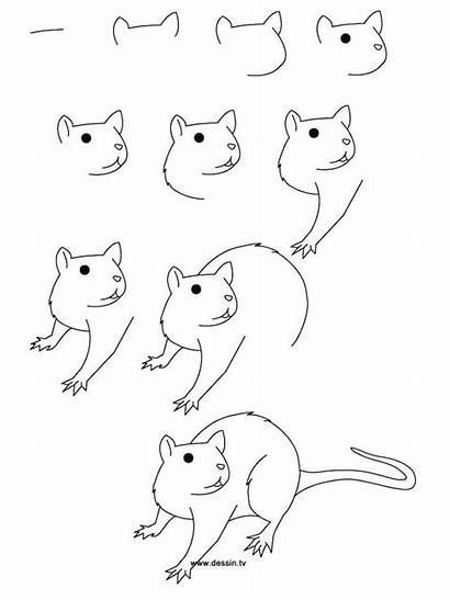Draw Animals Rat Step Drawing Dessin Animal