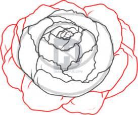 How to Draw Peony Flowers