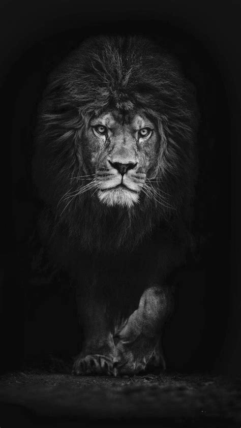 Pin by | r o s i e | on animals. | Lion wallpaper, Black