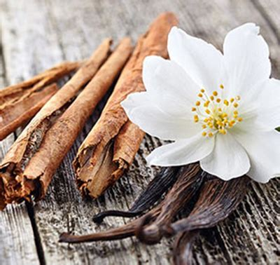 vanilla cinnamon aroma impressions