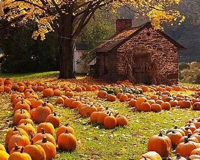 Harvest Autumn Widescreen Wallpapers Desktop Background