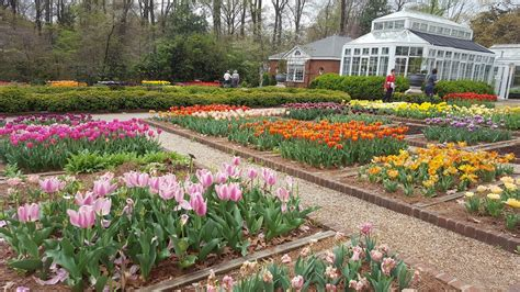 Dixon Gardens by Divers And Sundry Hello 230 000 Tulips At The