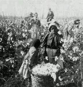 Slaves picking cotton | Slavery Photos | Pinterest