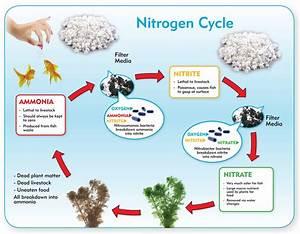 Nitrogen Cycle Diagrams