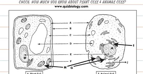 plant and animal cell worksheet homeschooldressage