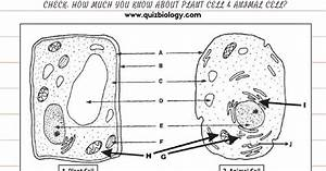 plant and animal cell worksheet homeschooldressagecom With structure of cell part 3 pass science solutions