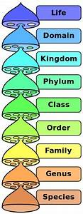 Difference Between Genus and Species | Difference Between  Phylum