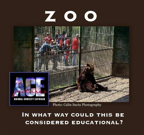 quotes animal zoos cruelty animals zoo burden rights prisons quotesgram cruel beasts circus captivity depressed why