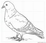 Pigeon Drawing Draw Coloring Pages Pigeons Rock Printable Step Drawings Bird Tutorials Outline Dove Supercoloring Beginners Java Finch Template Flight sketch template