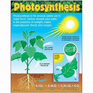 Photosynthesis Learning Chart  17 U0026quot  X 22 U0026quot