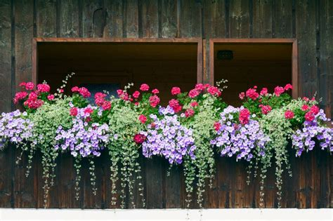 window  balcony flower box ideas  garden
