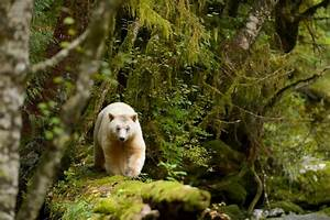 11 Facts About North America U0026 39 S Temperate Rainforests