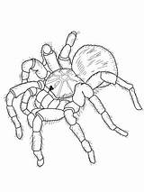 Coloring Tarantula Goliath Pages Drawing Printable Supercoloring Spiders Colouring Tarantulas Spider Needle Punch Patterns Crafts Coloringbay Getdrawings Cartoon Animal Categories sketch template