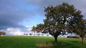 Bäume Für Kübel : aufr umkosten f r b ume versicherungsk nner ~ Michelbontemps.com Haus und Dekorationen