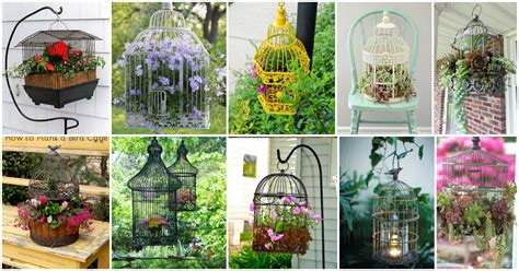 amazing collection of eye catching birdcage planters for your garden