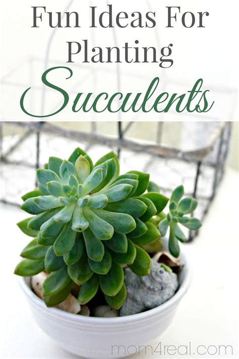 ideas for planting succulents ideas for planting succulents the graphics fairy