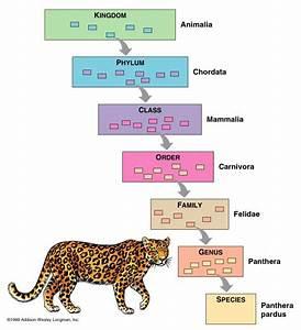 Sapiens Classification Chart Andrea Radulovic Biobiobiobio 5 1