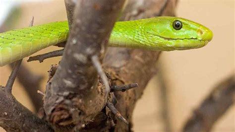 reptile largest zoo south dakota near gardens