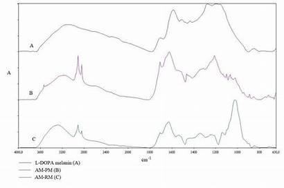 Melanin Ir Rm Ft Dopa Spectra Pm