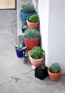 Succulents Tiny Pots &