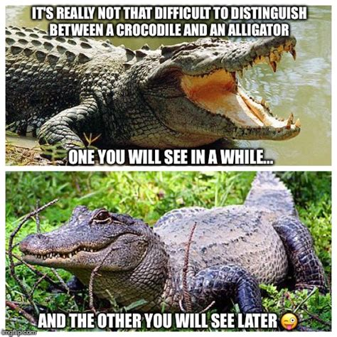 Alligator Memes - or you could just say hasta la vista baby imgflip