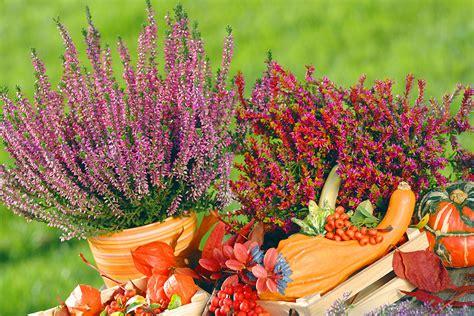 Blumen Im Garten Herbst by Blumen Im Herbst Herbst Blumen Im Beet Stockfoto