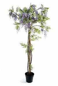 Pot Pour Arbre : arbre plante glycine violet en pot tronc en bois fleurs ~ Dallasstarsshop.com Idées de Décoration