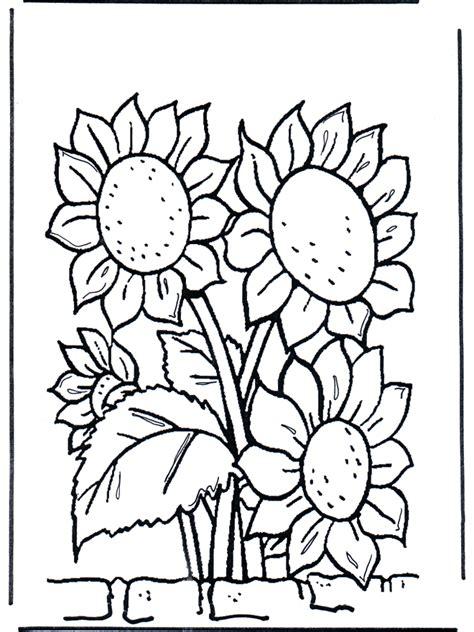 girasoli fiori