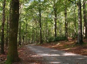 path tollymore forest park   albert bridge