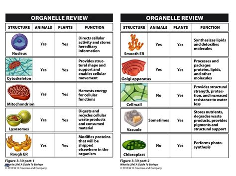 fun cell organelle games games world