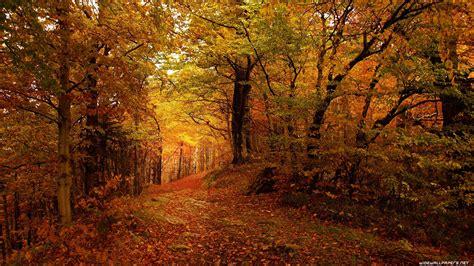 Autumn Wallpapers 4k by Autumn Desktop Wallpapers 4k Ultra Hd 3840x2160 5640 54 Kb