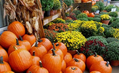 Fall Wallpaper Iphone Pumpkins by Fall Desktop Wallpapers With Pumpkins Wallpapers For
