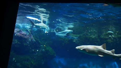 aquarium de lyon adresse 28 images aquarium of lyon visit 30 april american club of lyon
