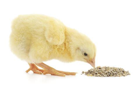 Feed Enzymes Striking A Balance Bri