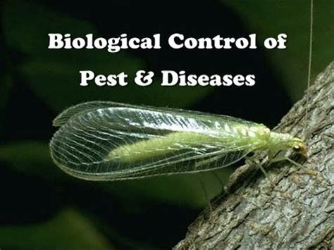 Biological Control Of Pest & Diseases Youtube