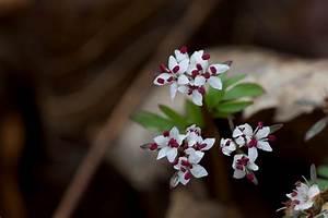 Blumen Im Frühling : kostenlose bild vorbote fr hling blumen bl ten wildblumen ~ Orissabook.com Haus und Dekorationen
