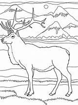 Elk Coloring Mountain Rocky Mountains Drawing Pencil Drawings Printable Deer Moose Lion Popular Getdrawings Getcolorings Colornimbus sketch template