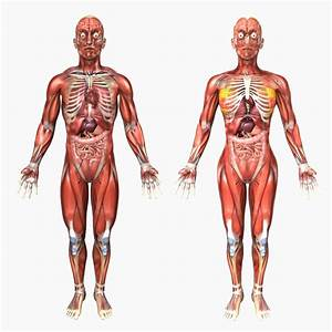 Human Body Diagram Male And Female