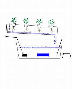 6 Best Images of Carrot Plant Diagram - Carrot Plant ...