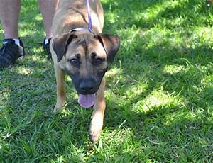 Spca Durban U0026 Coast Adopt A Dog Or Cat