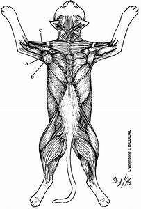 61 best images about Anatomy on Pinterest | Coloring ...