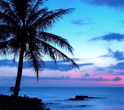 Google Screensavers Wallpapersafari Wallpapers Screensaver Hawaii Nexus