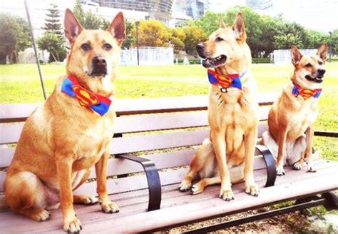 maxi zoo siege social maxi zoo une enseigne pour le bien être des chiens et chats
