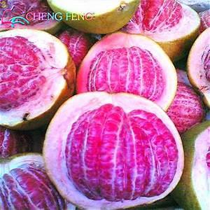 Popular Fruit Pomelo-Buy Cheap Fruit Pomelo lots from