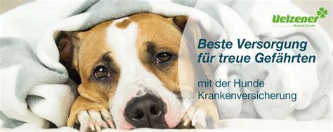 hunde kranken versicherung tierversicherungen