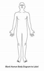 human body diagram With a body diagram