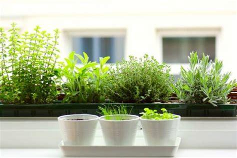 12 best herbs to grow indoors indoor herbs balcony