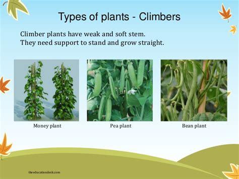 Types Of Pumpkin Plants by Environmental Science Evs Plants Class Ii