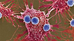 New, Weapons, Against, Cancer, Millions, Of, Bacteria, Programmed, To, Kill
