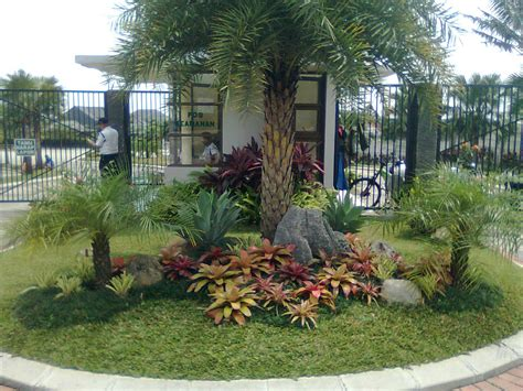 landscape idea palms landscape ideas